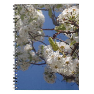 The Nice and Lovely notebook