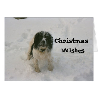 The Nowzad Dogs Christmas Card (1)