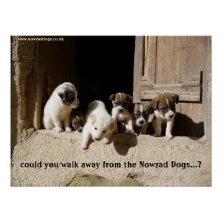The Nowzad Puppies poster