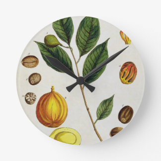 The Nutmeg, plate 353 from 'A Curious Herbal', pub Wall Clock