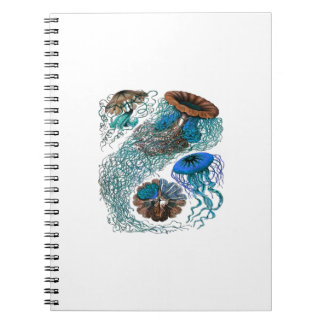 THE OCEAN PULSE NOTEBOOK