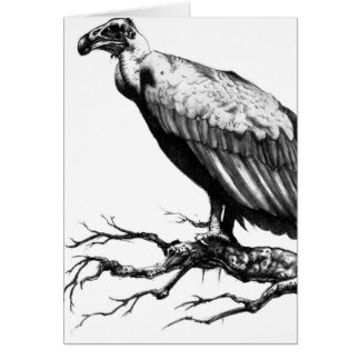 The Old Buzzard Greeting Card