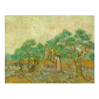 The Olive Orchard by van Gogh Postcard