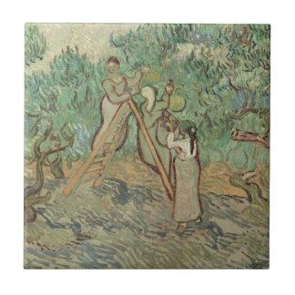 The Olive Orchard Tile