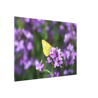 The One That Stands Out Butterfly Photography Art Canvas Print