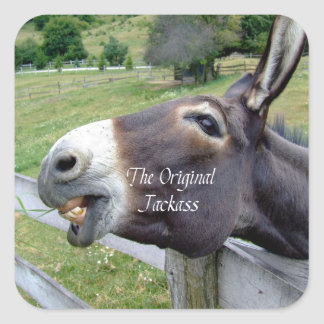 The Original Jackass Funny Donkey Mule Farm Animal Square Stickers