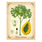 The Papaya - Vintage Illustration Postcard