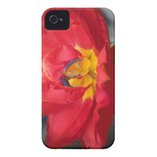 The Parrot iPhone 4 Case-Mate Cases