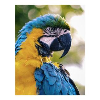 The Parrot Letterhead