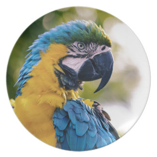 The Parrot Plate