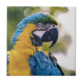The Parrot Tile