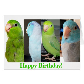 The Parrotlets Happy Birthday Bird Greeting Card