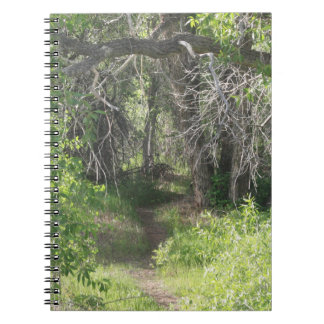 The Path Notebook
