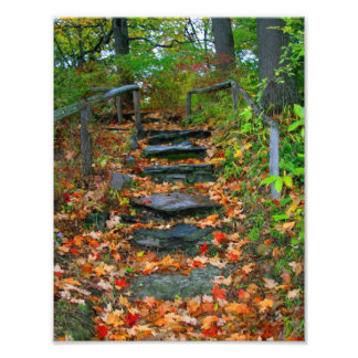 The Path Photo Print