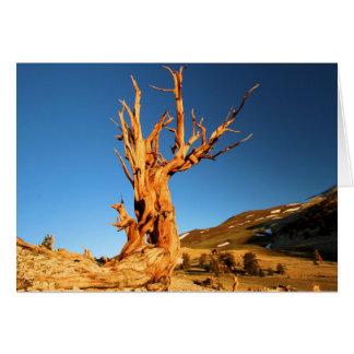 The Patriarch Bristlecone Pine Card