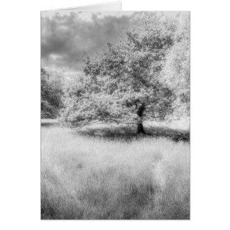 The Peaceful Meadow Card
