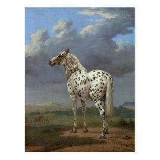 The Piebald Horse Postcard