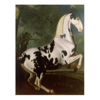 The Piebald Stallion at the Eisgruber Stud Postcard