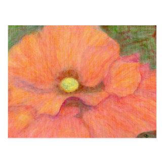 The Poppy, Postcard