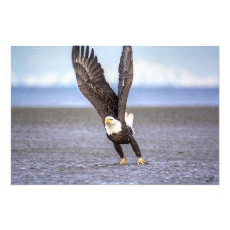 The Power of Flight Photo Print