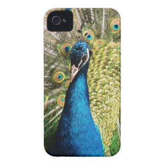The Pretty Peacock iPhone 4 Case-Mate Case