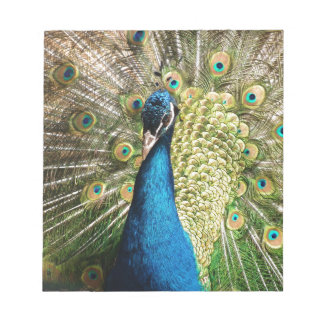The Pretty Peacock Notepad