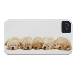 The puppies of the golden retriever Case-Mate iPhone 4 case