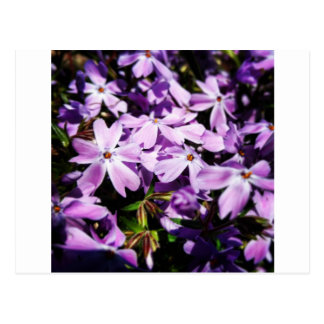 The Purple Flower Patch Postcard