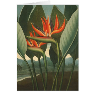 'The Queen (Bird of Paradise)' - Temple of Flora Card