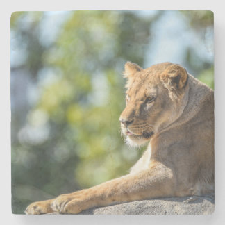 The Queen On Her Throne Coaster Stone Coaster