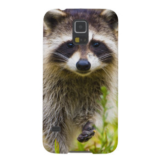 The raccoon, Procyon lotor, is a widespread, 3 Cases For Galaxy S5