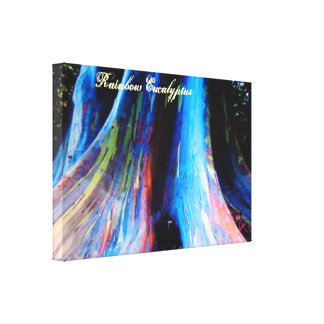 The Rainbow Eucalyptus Tree of Hawaii Canvas Print