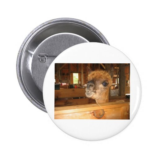 """""""the real money's in alpacas"""" pinback button"""