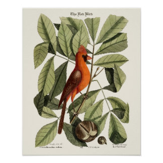 The Red Bird - Seligmann Poster