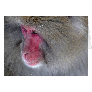 The Red Faced Baboon Card