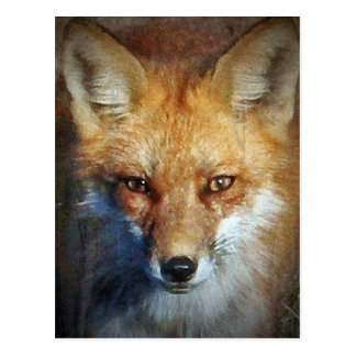 The Red Fox Gifts & Greetings Postcard