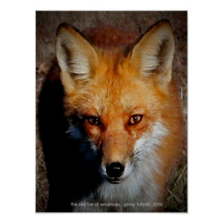 The Red Fox of Arkansas Poster