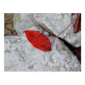 The Red Leaf Postcard