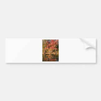 The Red Tree at Sunset Bumper Sticker
