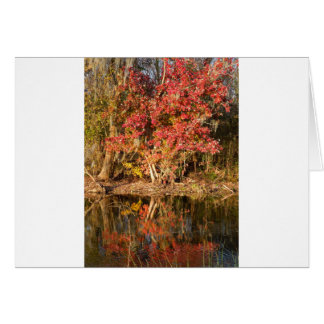 The Red Tree at Sunset Card