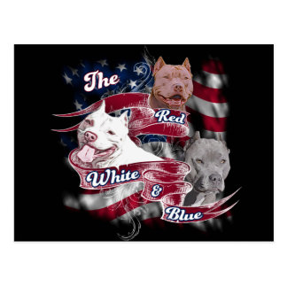 The Red, White & Blue Pitbull Dogs Postcard