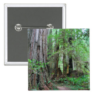 The Redwoods - Sequoia 2 Inch Square Button