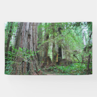 The Redwoods - Sequoia Banner