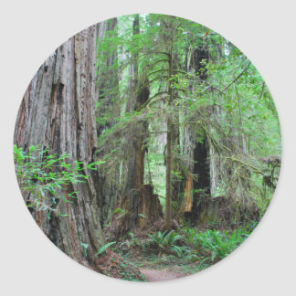 The Redwoods - Sequoia Classic Round Sticker