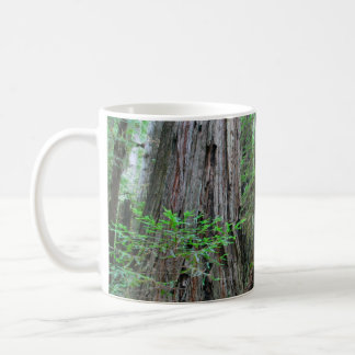 The Redwoods - Sequoia Coffee Mug