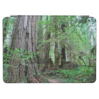 The Redwoods - Sequoia iPad Air Cover