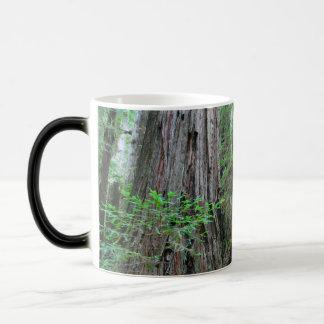 The Redwoods - Sequoia Magic Mug