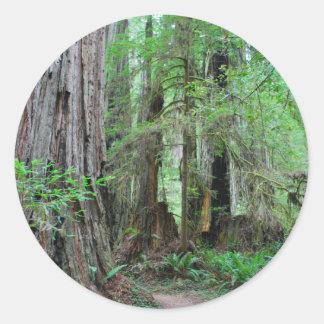 The Redwoods - Sequoia Round Sticker