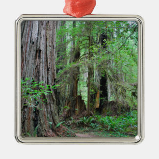 The Redwoods - Sequoia Silver-Colored Square Ornament