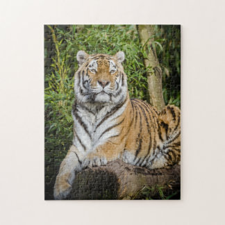 The Regal Tiger Photo Puzzle with Gift Box